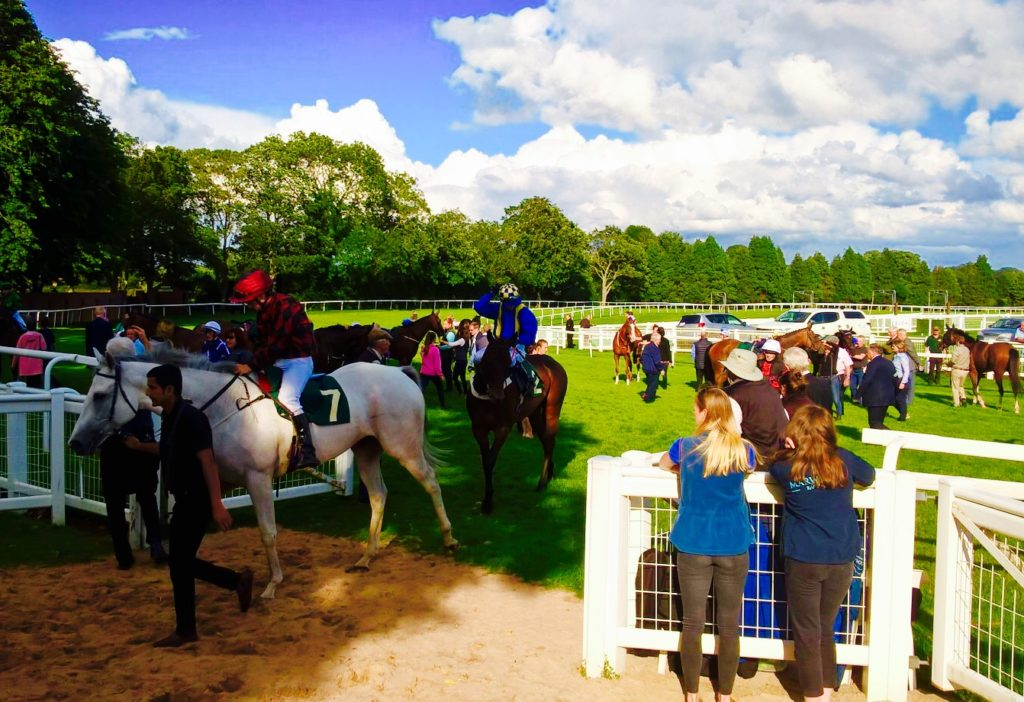 Horses after the race at Ripon