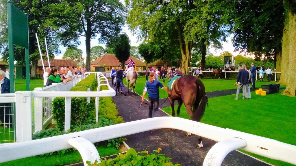 Horses pre race at Ripon
