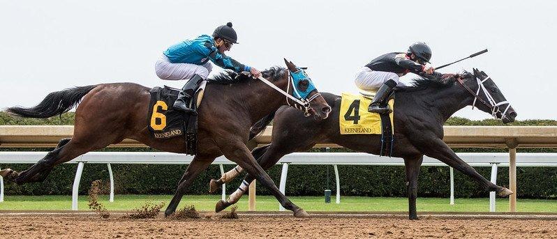 Horse racing headgear guide