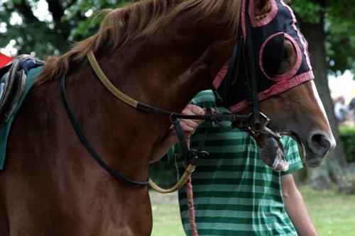 Horse racing headgear blinkers